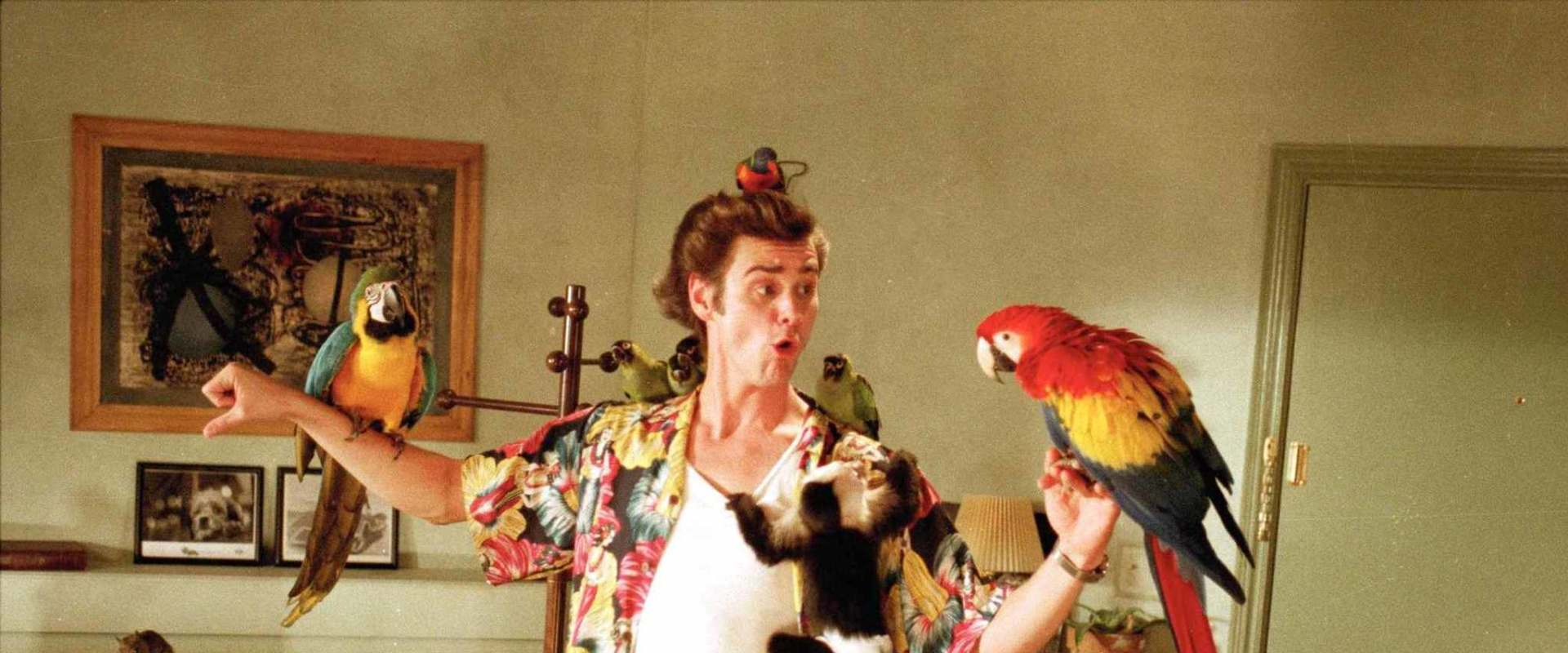 Ace Ventura: Pet Detective background 2