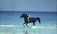 The Black Stallion Movie Still 2