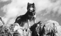 White Fang 2: Myth of the White Wolf Movie Still 6